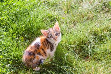 Kätzchen im Gras