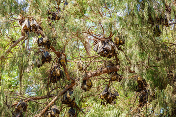 Bat groups hanging on tree branch