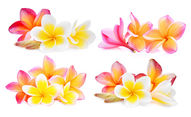 Spoed Fotobehang Frangipani set of white and pink frangipani (plumeria) flower isolated on white background