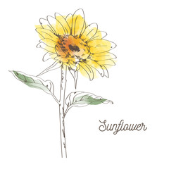 Yellow sunflower illustration design on white background