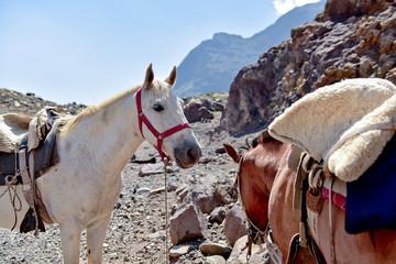 Horses near Glacier el Morad