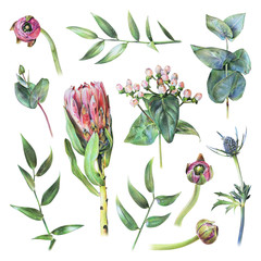Set of protea, feverweed, hypericum, buttercup buds, eucalyptus and green leaves drawn by hand with colored pencil. Spring plants and flowers. Isolated illustration on white