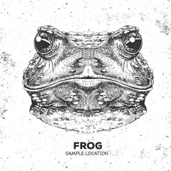 Hipster animal frog. Hand drawing Muzzle of frog