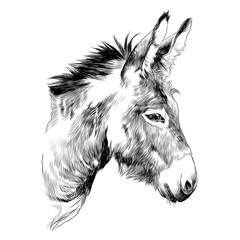donkey sketch vector graphics a monochrome graphic the head