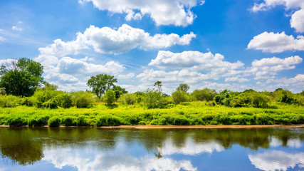 Wall Mural - Summer landscape with river and trees
