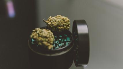 Buds of marijuana in the grinder close-up.Varietal marijuana and smoking culture 420