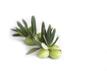 Fototapete - Ramo di ulivo e olive verdi