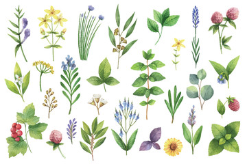 Hand drawn vector watercolor set of herbs and spices.