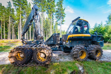 Forest cutting. Timber harvester. Forest cutting with the help of a harvester