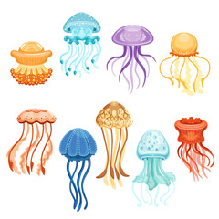 Colorful jellyfish set, swimming marine creatures watercolor vector Illustrations