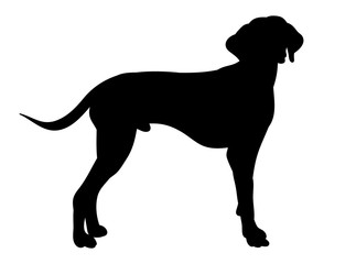 isolated silhouette dog