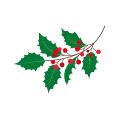 vector flat cartoon style holly tree, mistletoe or ilex branch with leaves and berries . Isolated illustration on a white background. Christmas cards, banners of presentation decoration design symbol