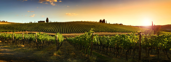 Beautiful landscape of Vineyards in Tuscany at sunset. Chianti region in summer season. Italy.