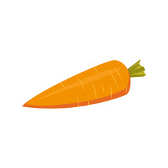 Cartoon style whole raw carrot vegetable, vector illustration isolated on white background. Cartoon style whole, uncut, unpeeled carrot, farm product, autumn harvest
