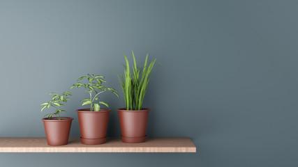 Drei Topfpflanzen im Blumentopf auf Regal