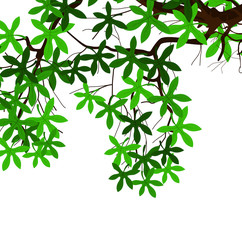 Green Leaves Nature Branch Vector