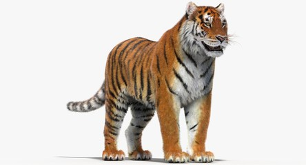 Tiger Amur (3D)