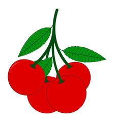 Bunch of Cherries Branch Vector