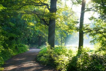 Morgenstimmung in einem Wald im Spätsommer bis Herbst