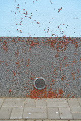 Firebug, Blunt blacksmith (Pyrrhocoris apterus), invasion nymph of bugs on the building wall