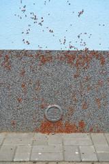 Firebug, Blunt blacksmith (Pyrrhocoris apterus), invasion nymph of bugs on the building wall