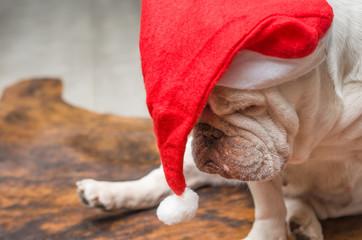 Bulldog inglês com chapéu de papai noel dormindo