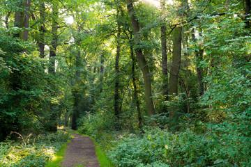 Waldweg in einem Wald in Deutschland