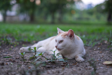 Cats that are vacant, awaiting owners with loneliness. soft focus.