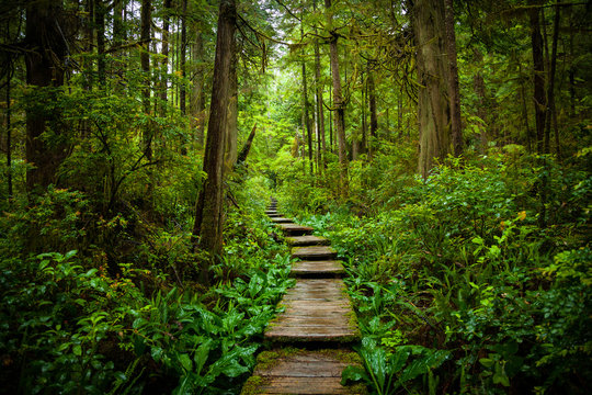 Scenic Trail Through the Forest