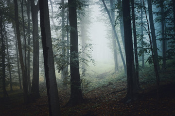 forest path in fog, mysterious atmosphere background