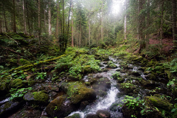 Seebach im bayerischen Wald, Seebach-River, Bavarian Forest
