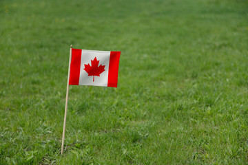 Canada flag. Canadian flag on a green grass field lawn background. National flag of Canada waving outdoors