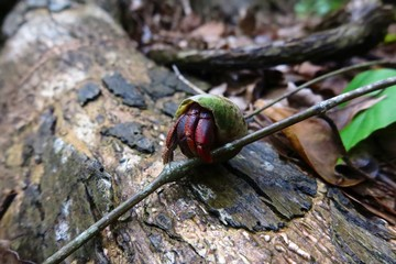 hermit crab exploring forest alone