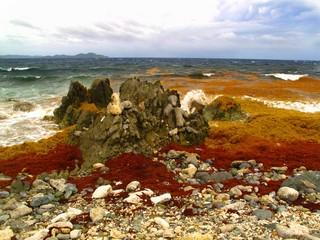 waves break on rocky coral beach beneath stormy sky at Drunk Bay, St. John, USVI, Caribbean