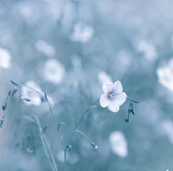 Wall Mural - Flax Flowers