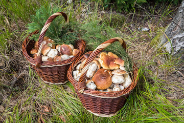 Shot of pair wicker baskets with mushrooms