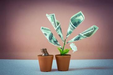 money tree made of hundred dollar bills.