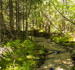Woods Green