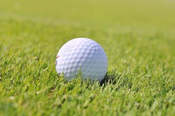 balle de golf dans l'herbe rase d'un green
