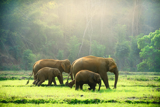 Elephant family walking through the meadow.