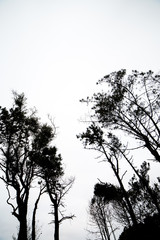 Black trees on cloudy sky background