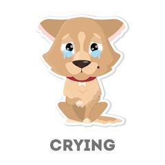Isolated crying dog.