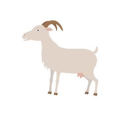 Cartoon white goat. G is for Goat.