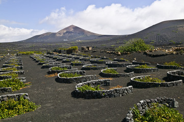 Weinbau auf der Insel Lanzarote, Kanarische Inseln, Spanien