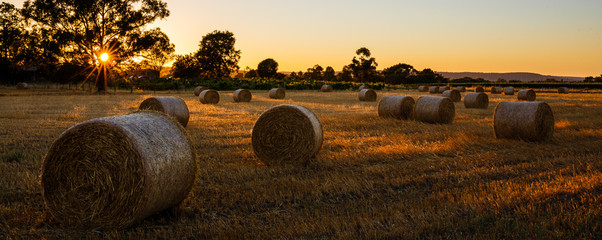 Straw Bales in the Swan Valley of Western Australia