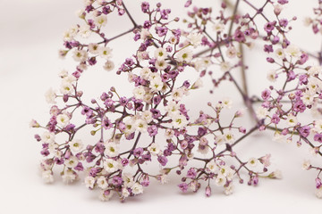 Small Purple and White Blooms on a White Background