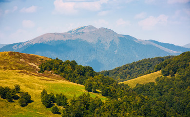 grassy hills with forest and high peak in a distance. beautiful nature scenery in fine early autumn weather