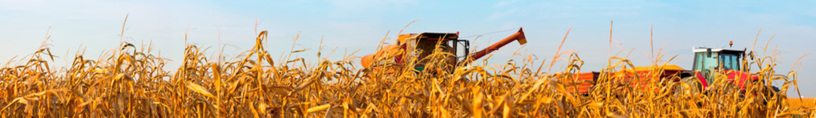 Panorama of the Corn Field with Harvest Combine and Tractor