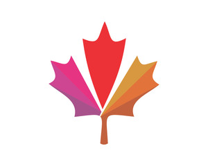 canada maple leaf icon image vector