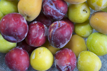 red and yellow fresh plums